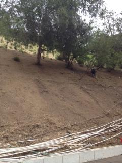 Hillside Residential Landscaping