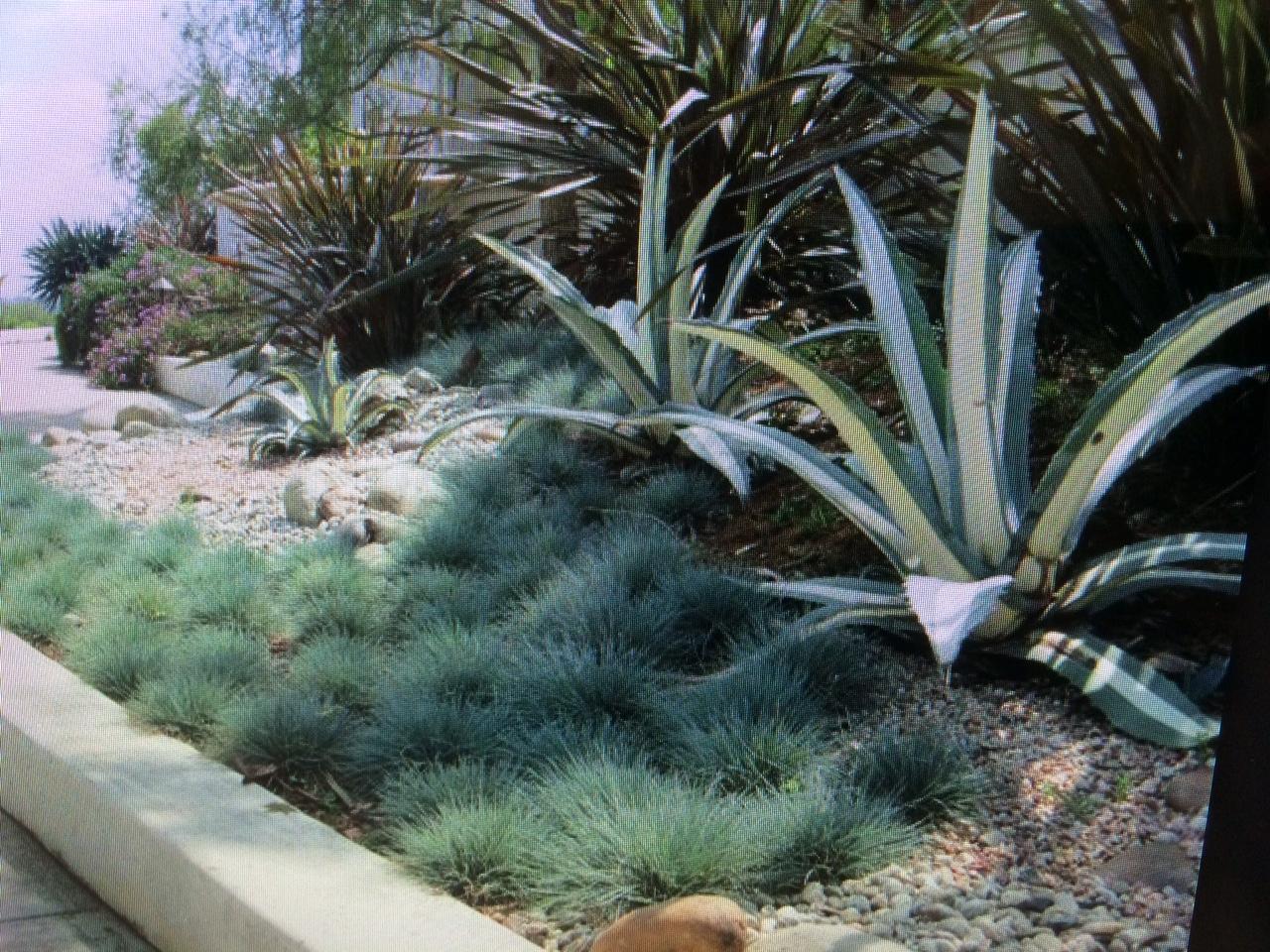 Desert Landscape good