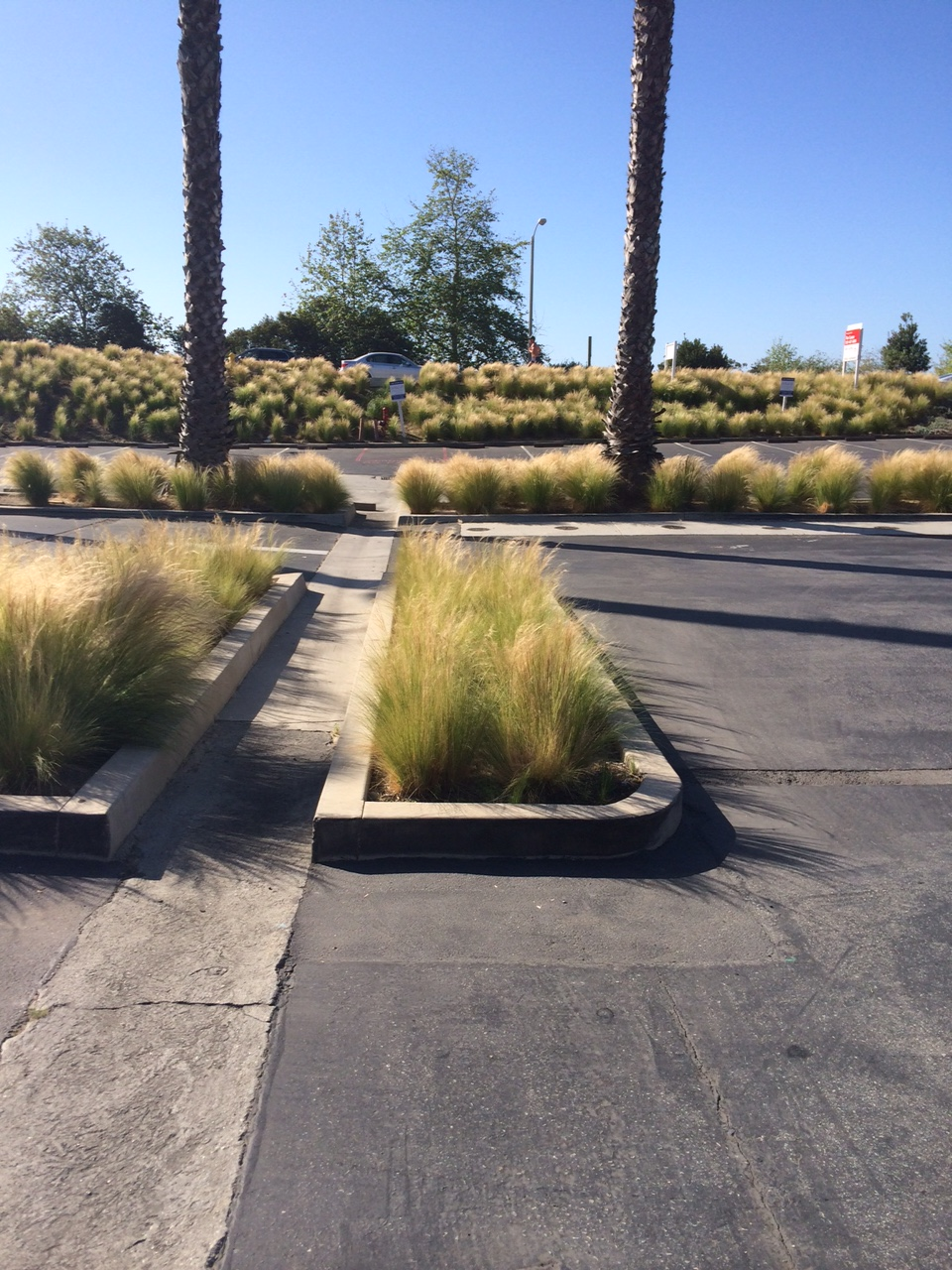 Drought tolerant for commercial saving water