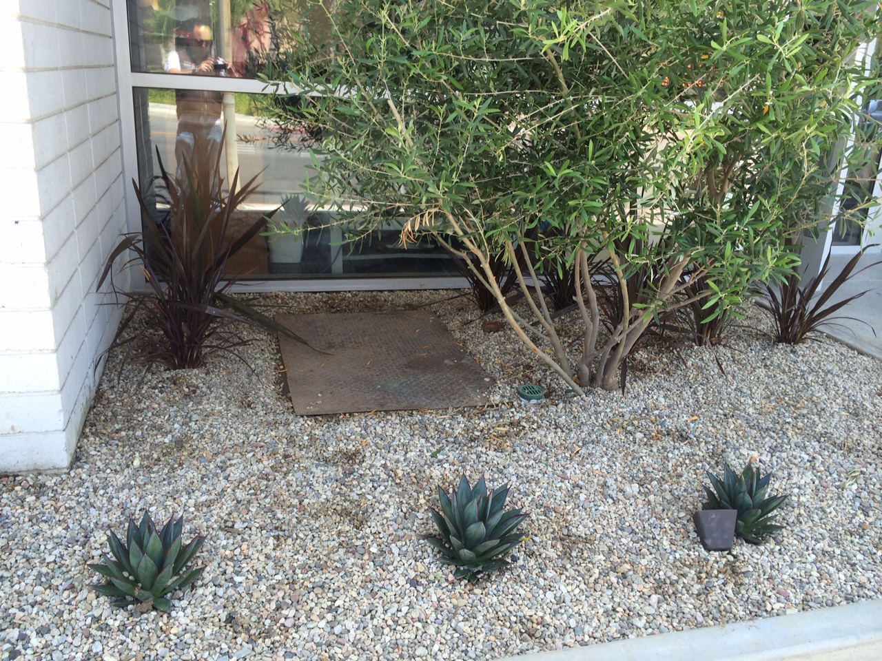 Drought tolerant saving water without sacrificing  a nice landscape
