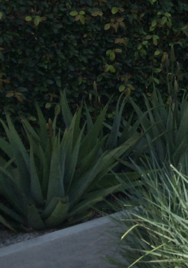 Drought tolerant ways to save water